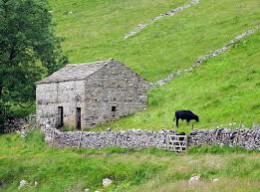 On your way onward, you'll notice the odd stone barn and dry stone wall. This is in Langstrothdale...