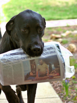 Strange But True Pet News That May Have Slipped Past Main Stream Media