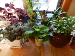 Houseplants have specific requirements that need to be met.