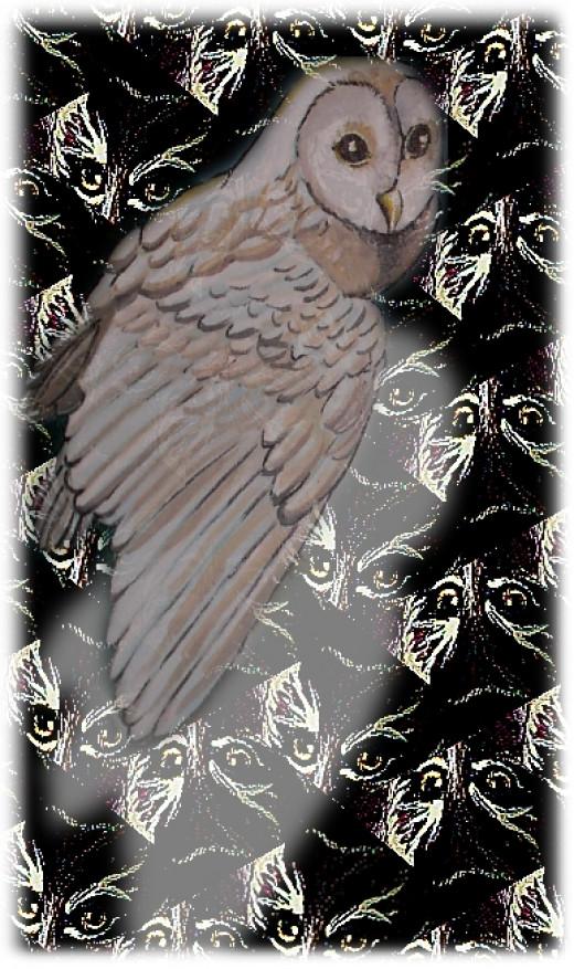 owls wisdom