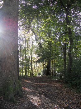 The woodland walk to Hardy's cottage in Lower Bockhampton, near Dorchester.