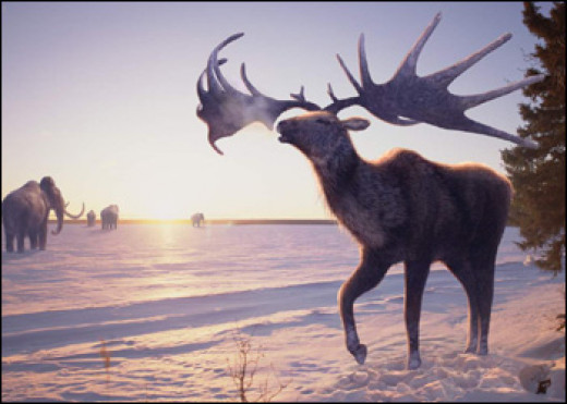 The giant deer, known as Megaloceros.