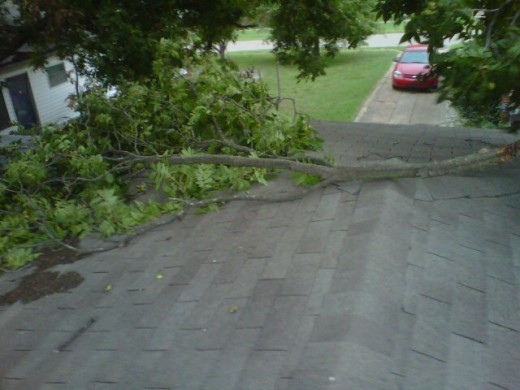 Large pecan branch on the garage roof.  Fell BEFORE it stormed.