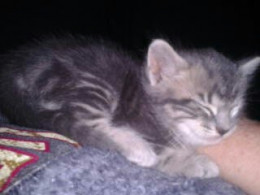 This is the first kitten I got re-homed.  He is just as sweet as he looks!