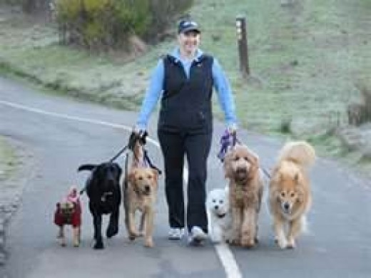 A dog walker will take your best friend out for scheduled walks.
