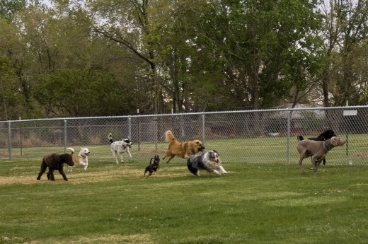 Your dog can romp and play with other dogs at a Dog Park.