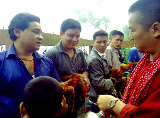 Priest of Manakamana Temple blessing fowls for sacrifice