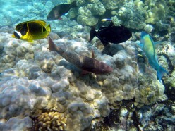 Coral Reefs and Watershed Management