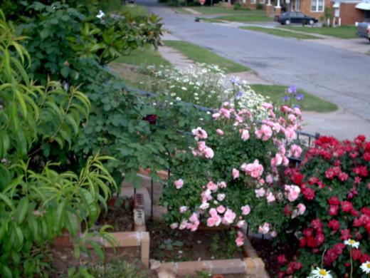 beautiful flowering of mankind's spirits.