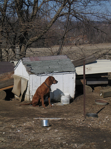 NOT THE CASE I CALLED ABOUT, BUT WHAT IF YOU SAW THIS SITUATION ?  WOULD YOU MAKE A CALL? (THE DOG IS CHAINED)