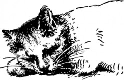 Sleeping_Cat