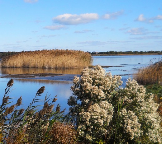 View of wetlands on clear sunny day.