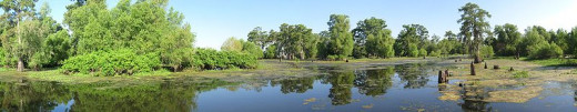 The Lower Mississippi/Atchafalaya Area has lots of swamps that need continual replenishment.