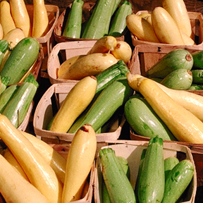 Popular zucchini and summer squash at a farmers market