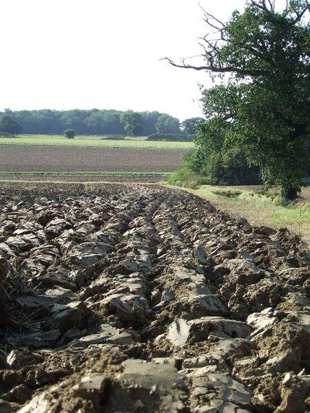 Heavy clay soil