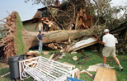 Tree damages caused by Hurricane Bonnie.