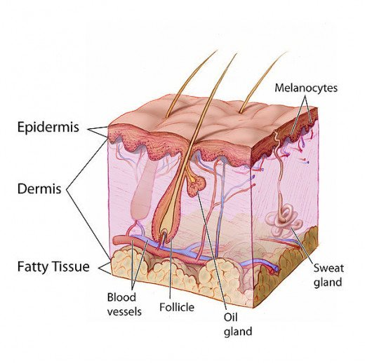 The causes of dry skin can be many due to the fact of the skin itself being a complicated organ.