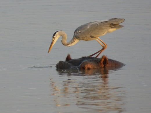 Fishing platform-Hreon on Hippo