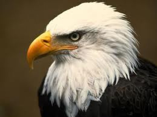 Your Inner Eagle