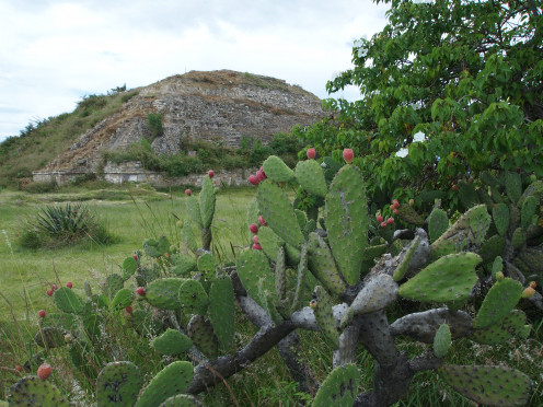 The beautiful vegetation in Monte Alban is part of its charm and appeal. Atop the highest pyramid of Monte Alban´s Grand Plaza. Oaxaca Mexico.