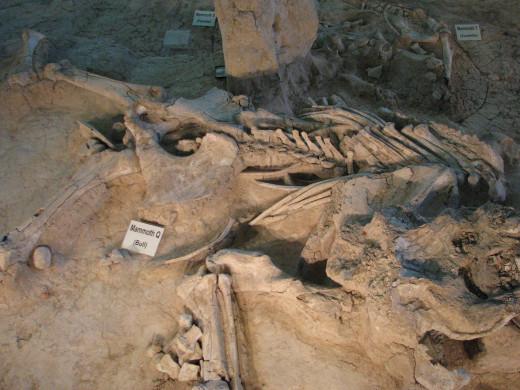 Mammoth Bones: Waco Mammoth Historic Site