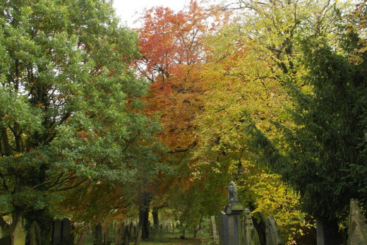 Cemeteries and churchyards can be good places to get in touch with nature