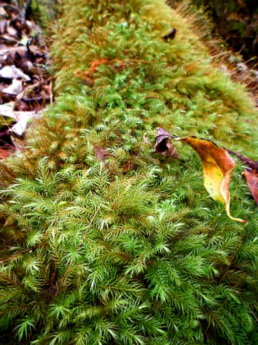 Moss covers a dead tree branch on the trail