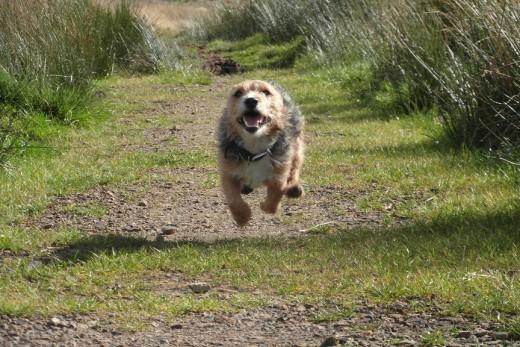 Bob the dog!