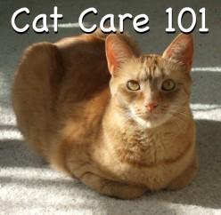 Cat Care 101