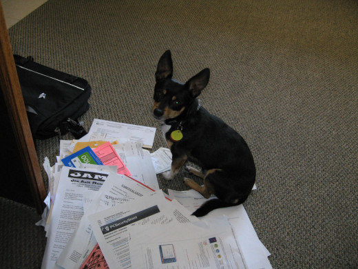 Lou likes to jump in and help with paperwork!
