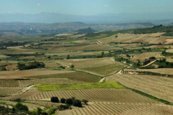 Spanish Wine Regions-Rioja