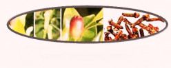 Clove: Medicinal Uses & Health Benefits