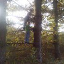 My grandsons Colton and Maddox climbing a big Pine tree out behind their dad's barber shop.