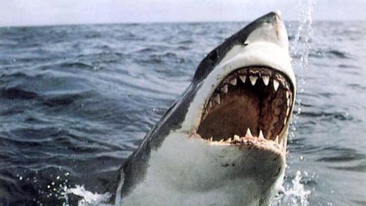 great white shark breeching the water