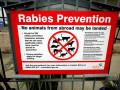 Determining An Animal Is Rabid Takes Brains (literally)