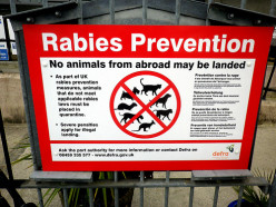 Determining An Animal Is Rabid Takes Brains (literally)