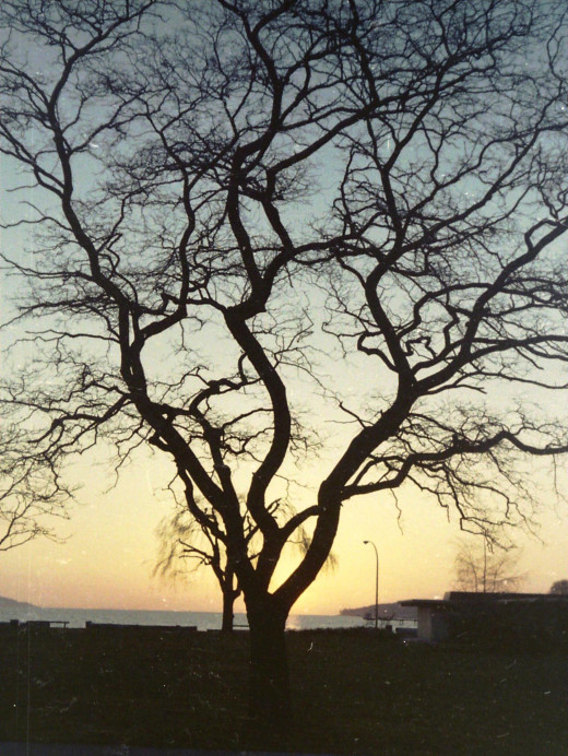 Winter Trees - Kits Beach, Vancouver, BC 1973