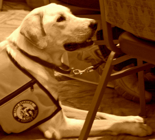 Service dogs must be well behaved in the public.