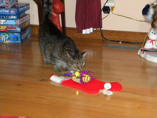 Holly checks out her stocking from Santa.