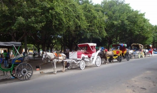 To take a tour of the old city of Granada, a carriage is a good option.  They will take you to all the historic sites.  The horses and carriages are often decorated with ribbons and bright colors.  This photo was taken from Hotel Alhambra.
