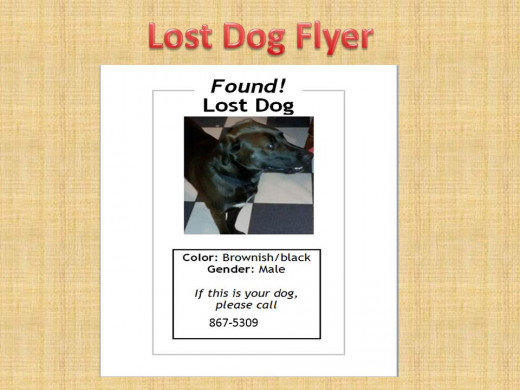 A flyer for a lost dog who was found