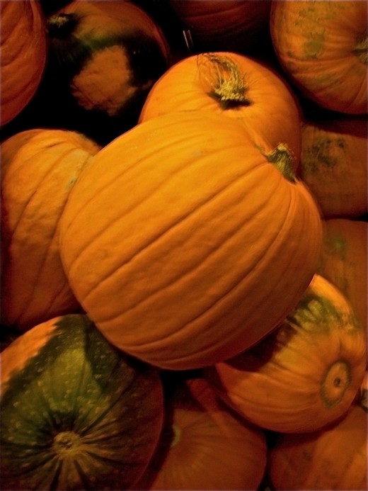 Pumpkins in a pile are ready for carving into Jack O'Lanterns.