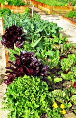 Pick out some fresh cilantro