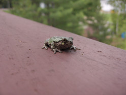 As beautiful as amphibians get...this fellow is pretty charming!