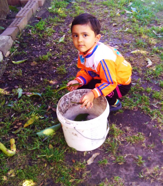 Child picking up the fallen mango leaves from the garden.