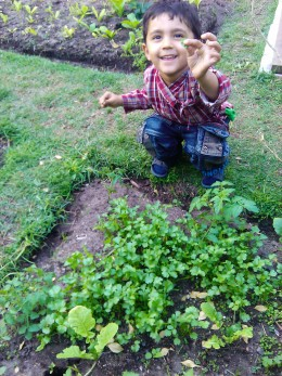 child happy to show picked corriander leaves, he really likes the smell of corriander herb!
