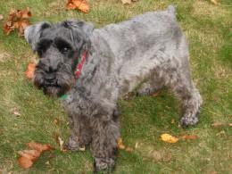 My Dog Fritz
