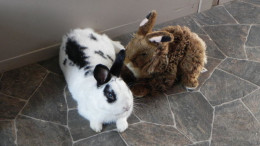 Bunny Medicine Time