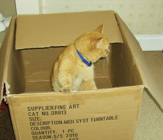 Ginger cat playing in a cardboard box.