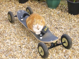 My cat riding a mountainboard. He might look good on the board but he was useless at jumps.